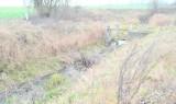 Rzeka Liwa wyschła na niemal 9-kilometrowym odcinku. Winna nie tylko susza?
