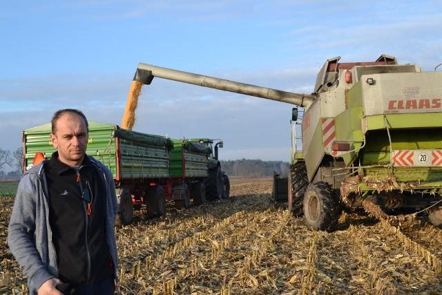 Rolnik z Serocka na swoim polu kukurydzy