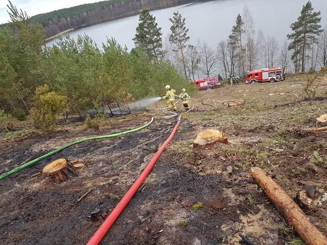 Zaprószenie ognia przy nieostrożnym wypalaniu gałęzi, to prawdopodobna przyczyna pożaru lasu w miejscowości Mogiel (gm. Lipnica). – Spaleniu uległo około 400 metrów młodnika. Zagrożony ogniem był duży kompleks leśny – mówi starszy kapitan Fryderyk Mach, zastępca komendanta powiatowego KP PSP w Bytowie. W prawie trzygodzinnej akcji brało udział 21 strażaków (zastępy OSP z Lipnicy, Borowego Młyna, Zapcenia oraz JRG Bytów).