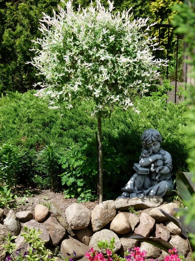 Ogród Roberta J. Markiewicza z Zielonej Góry.