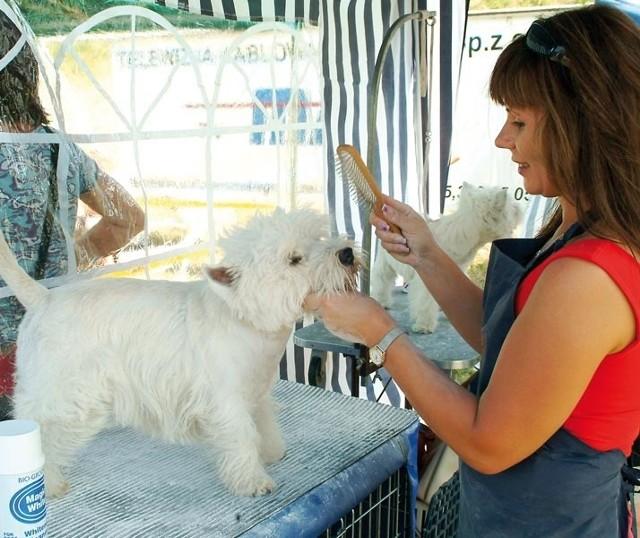 Właściciele psów nie muszą już sami dbać o wygląd pupila, pomocne są w tym profesjonalne firmy.
