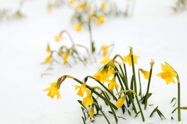 Choć na drogach jeszcze lód, to w powietrzu czuć już wiosnę