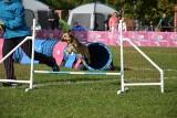 """""""Latające psy"""" w Gdyni. Dla frisbee potrafią zrobić niesamowite rzeczy! Szybujące czworonogi w Parku Kolibki"""