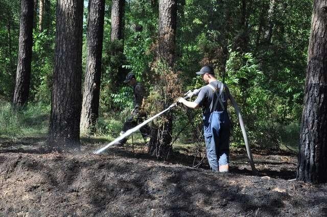 W Nadleśnictwie Żołędowo aż osiem razy ogień zaprószyli ludzie