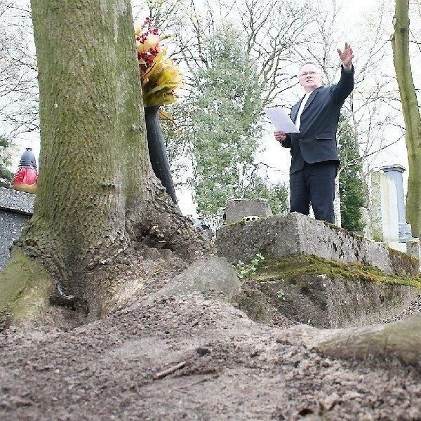 Henryk Stępkowski, kierownik administracji  cmentarza, pokazuje jedno z drzew, które  uszkodziło nagrobek.