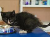 Młodziutka koteczka do adopcji