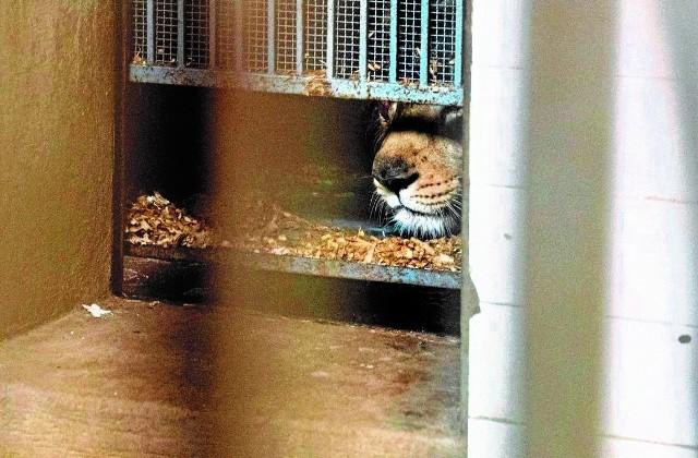 Na razie młody chowa się w klatce.