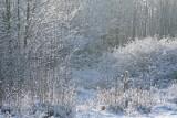Pogoda na luty 2021. Wielki powrót zimy i mrozów w połowie lutego. Sprawdź prognozę pogody na najbliższy miesiąc 1.02.21