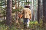 Ostrzeżenie dla grzybiarzy. Tego nie rób w lesie, bo dostaniesz mandat, nawet 5000 zł. Za co jeszcze można zapłacić karę?