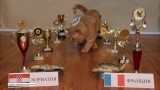 Kot Donatello-Dorato już wie. Zwierzak wytypował zwycięstwo Chorwatów w finale mundialu