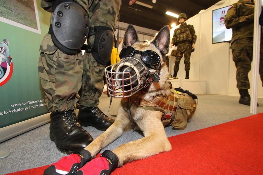 """Pies patrolowo-tropiący """"Kares"""" w pełnym rynsztunku, czyli butach chroniących łapy przed uszkodzeniami i goglach chroniących przed pyłem."""