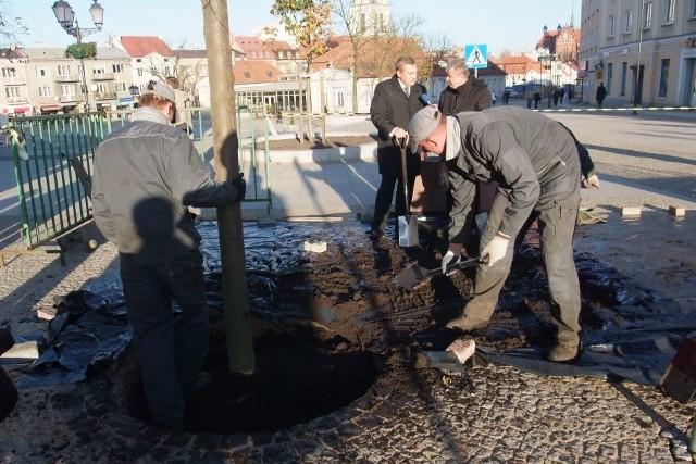 W Bialymstoku na ul. Suraskiej posadzono lipy. W mieście przybedzie 550 drzew