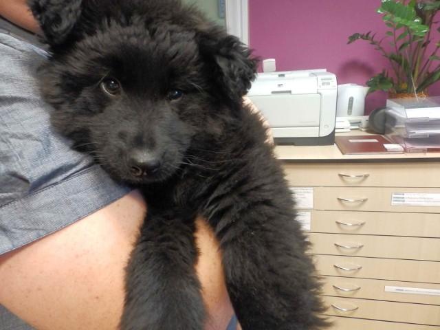 Młody kudłaty pies znaleziony na terenie firmy Malek jest bardzo łagodny.