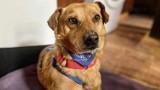 Psy, porzucone przez właścicieli, dwa lata przymierały głodem. Jeden nie przeżył mrozów