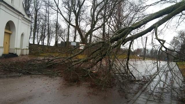 Po silnych wichurach z nocy 23 na 24 grudnia, wiatry nieco straciły na sile. W niektórych rejonach województwa silne podmuchy dalej jednak powodują zniszczenia.CZYTAJ:Podlaskie. Silny wiatr powalał drzewa. Kilka tysięcy domów jest bez prądu25 grudnia druhowie z OSP Krynki musieli wyjeżdżać do powalonego drzewa, które zagradzało drogę.