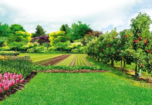Pielęgnacja roślinPielęgnacja roślin po ulewnych deszczach i zalaniu