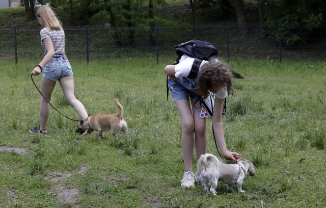Przed kilkoma dniami otwarto wybieg dla psów przy Osadzie Grud, który powstał w ramach budżetu obywatelskiego na 2021 r.