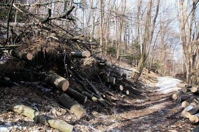 Na terenie OPN szadź zniszczyła niemal 20 ha lasu; na razie uprzątnięto obszary leśne przy drogach i szlakach dla turystów Fot. Piotr Subik