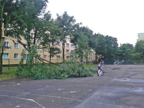 Na boisku między blokami na os. Zachód w Stargardzie, gdzie bawią się dzieci i młodzież, złamało się i spadło drzewo. Na szczęście nikomu nic się nie stało.