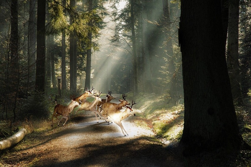 15 ciekawostek na Dzień Lasów [zdjęcia]