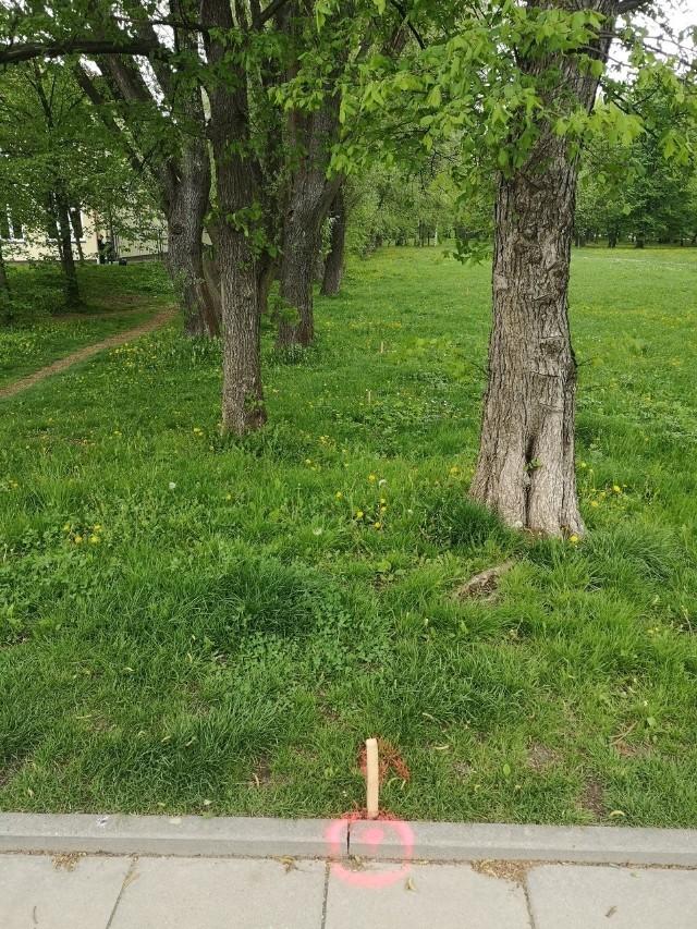 Budowa wodociągu wiąże się z wycinką drzew