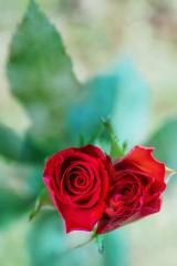 Walentynki 2020. Fotograficzna impresja na temat walentynkowych serduszek na Święto Zakochanych [ZDJĘCIA]