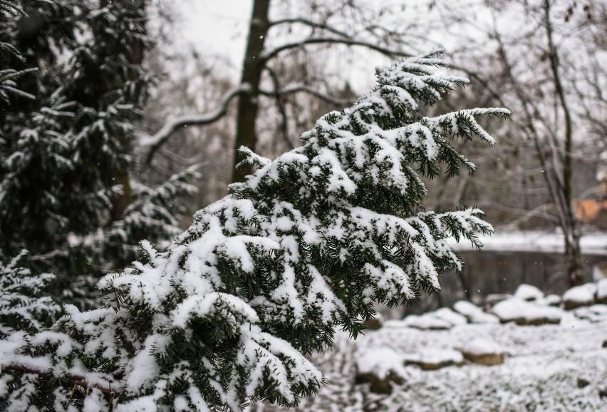 Jaka będzie zima 2020/21? Mamy pierwszą prognozę pogody!...