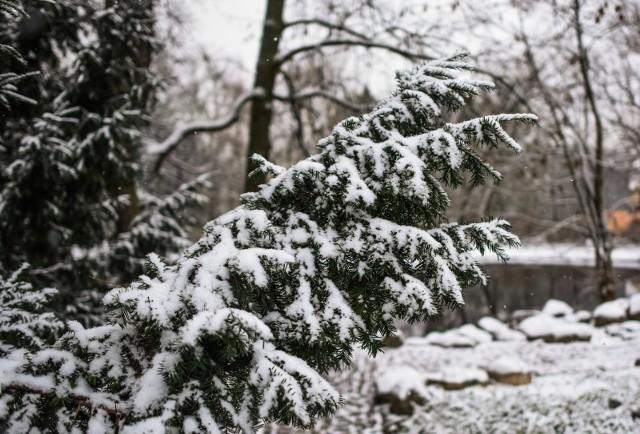 Jaka będzie zima 2020/21? Mamy pierwszą prognozę pogody! Zobaczcie na kolejnych zdjęciach >>>>>>
