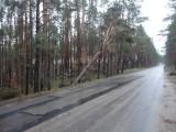 Powiat kościerski. Uszkodzone przez nawałnicę drzewa są jak tykająca bomba [zdjęcia]