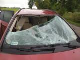 Koszmarny wypadek pod Legnicą. Sarna wpadła do auta, w środku było dziecko. Zobaczcie zdjęcia