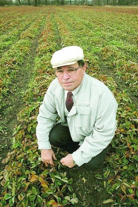 - Nasze pola, owoce są systematycznie kontrolowane, aby utrzymać rygory ekologicznych upraw. Ale to się opłaca, bo zdrowe owoce dobrze się sprzedają - Józef Drozdek z grupy producenckiej plantatorów truskawek.