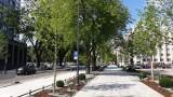 Drzewa, krzewy i trawy zmieniają ulice w centrum Łodzi. Rewitalizacja = zieleń