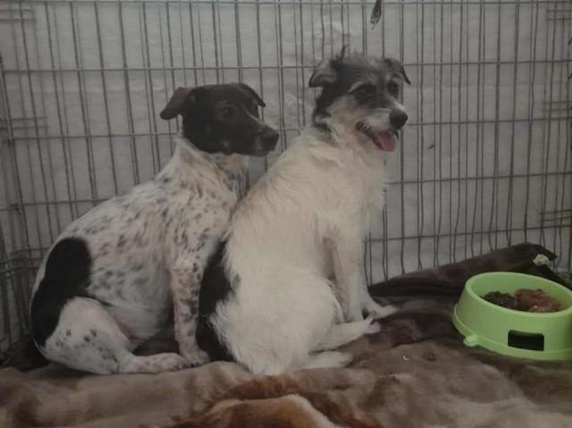 Psy były przemarznięte, karmione namoczonym starym chlebem oraz czasami mlekiem. Załatwiały się na balkonie i w mieszkaniu.