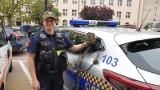 Fotopułapki łódzkiej straży miejskiej. Kamery z czujnikami ruchu pomagają walczyć z nielegalnymi wysypiskami