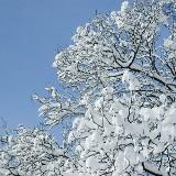 W niedzielę początek astronomicznej zimy