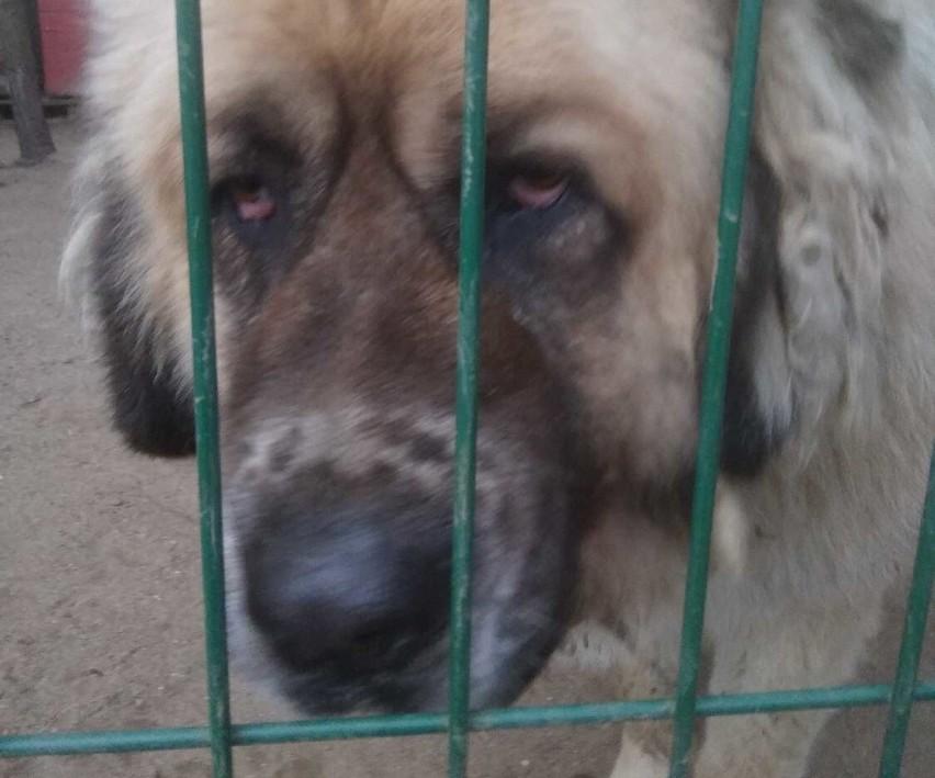 Zmarł pies odebrany byłemu senatorowi Waldemarowi B. Polityk ma już zarzuty za znęcanie się nad innym psem