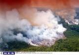 """Płoną """"płuca świata"""". Amazonia się kurczy. ONZ zaniepokojone, prezydent Brazylii oskarża europejskich polityków o kolonializm"""