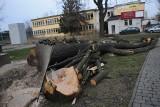 Efekt Szyszki? Wypadki przy wycince drzew