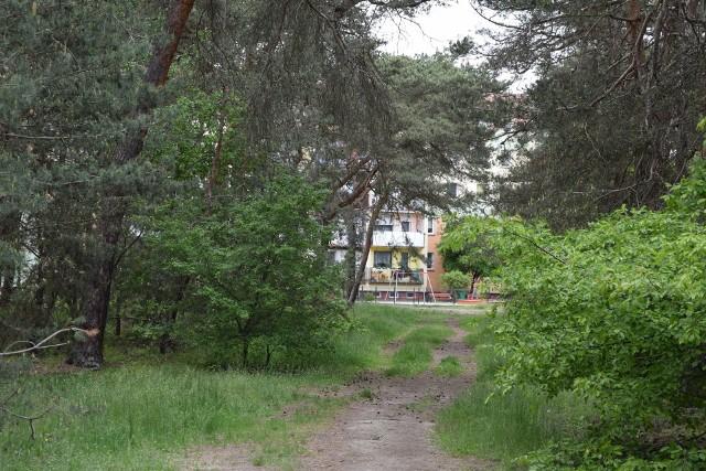 Lasek przy ul. Mickiewicza w Nowej Soli zdaniem obrońców, chroni miasto przez spalinami z S3. Na pięciu hektarach będzie park rekreacyjny.