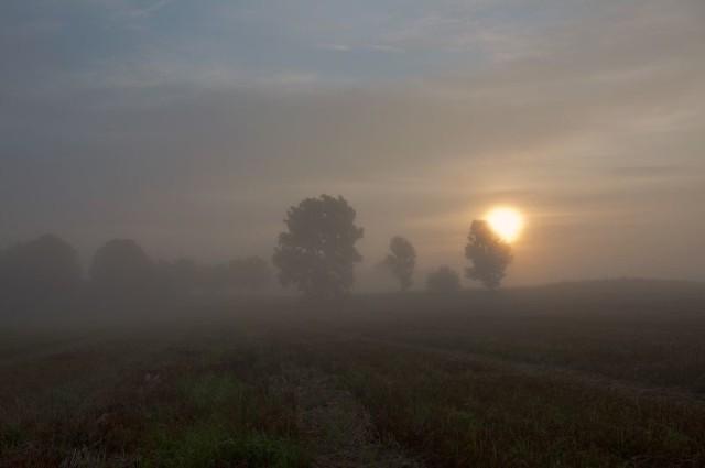 Dziś w nocy i jutro rano w regionie będą występowały silne mgły. Widoczność może spadać poniżej 100 metrów.