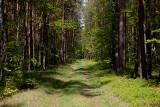 Chcesz odpocząć od miasta? Wkrótce łatwiej zanocujesz w lesie
