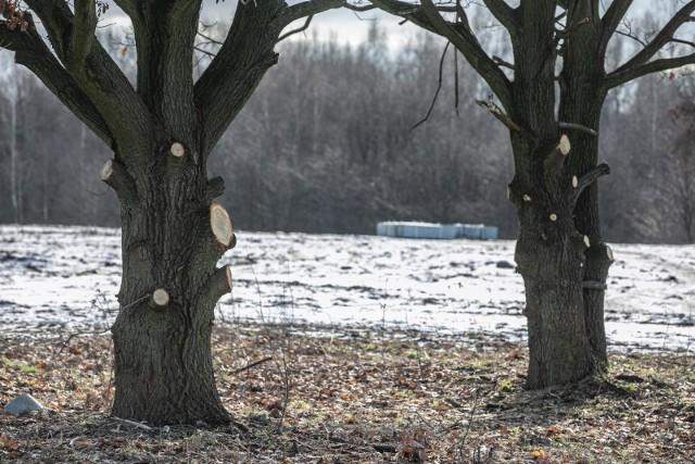 Grodzenie rejonu Słonej Wody rozpoczęło się już w styczniu tego roku. Jest jednak nielegalne