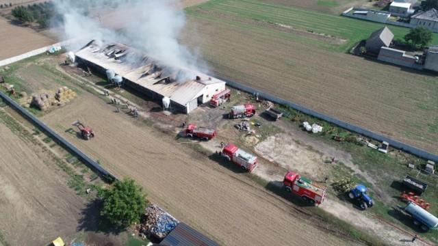 Około godziny 10.30 strażacy odebrali zgłoszenie o pożarze chlewni w miejscowości Chwaliszew pod Krotoszynem. W budynku znajdowało się około 700 świń. Zwierząt niestety nie udało się uratować. Zobacz więcej zdjęć ---->