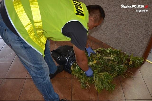 Myszkowscy policjanci znaleźli plantację  konopi indyjskich w środku lasu