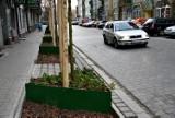 Ulica Żeromskiego we Wrocławiu będzie tonąć w zieleni. Miasto zrealizuje jeden z trzech projektów