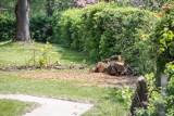 Wycinka drzew w Krakowie. W ciągu sześciu lat wycięto 47 tys. drzew