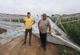 Wielkie zniszczenia po przejściu nawałnicy w gminie Klwów. Rolnicy są zrozpaczeni, wichura zniszczyła tunele (ZDJĘCIA, WIDEO)