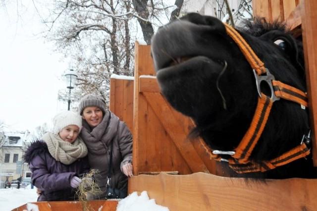 Kucyk Tadzik daje się pogłaskać, ale obok niego wisi też ostrzeżenie, że może też złapać zębami...