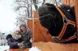 Kucyk Tadzik, koza sołtysa oraz króliki zapraszają do wolsztyńskiej szopki