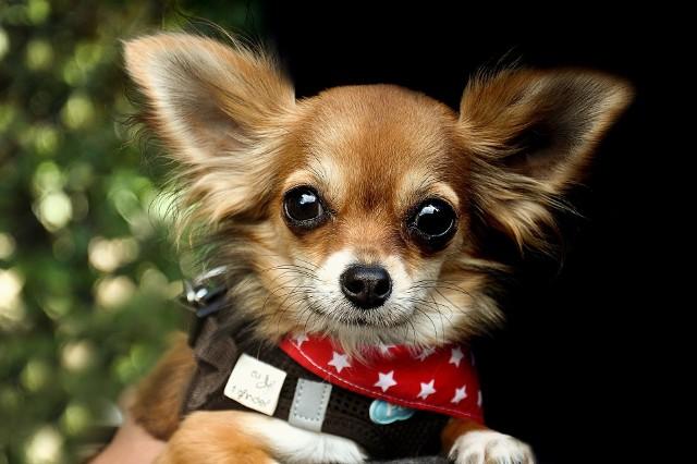 Oferta niektórych hoteli dla zwierząt w Białymstoku i okolicach jest imponująca. Psi goście mogą liczyć na przytulanie i głaskanie, basen, posiłki, prywatne pokoje z wybiegiem, pole do kopania w ziemi, a nawet zabiegi pielęgnacyjne